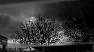 Reflet d'un arbre
