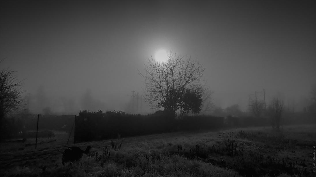 Soleil arbre et brouillard