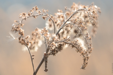 Plante frigorifiée
