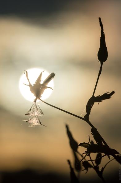 Pollen sous une fleur