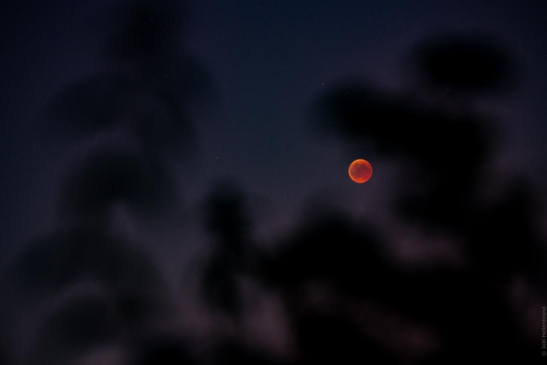 eclispe de lune et herbe folle