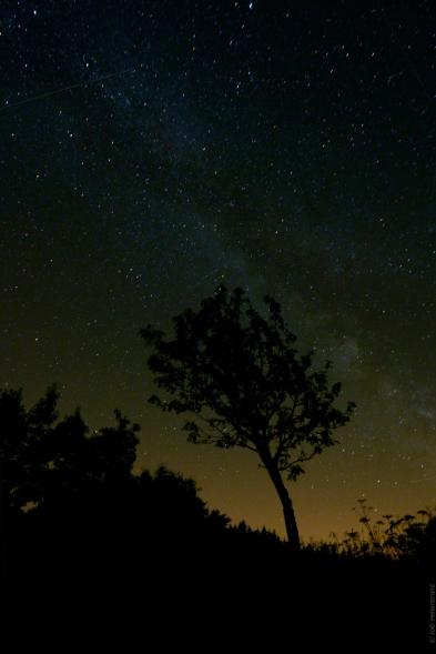 Arbre isolée sous l'univers